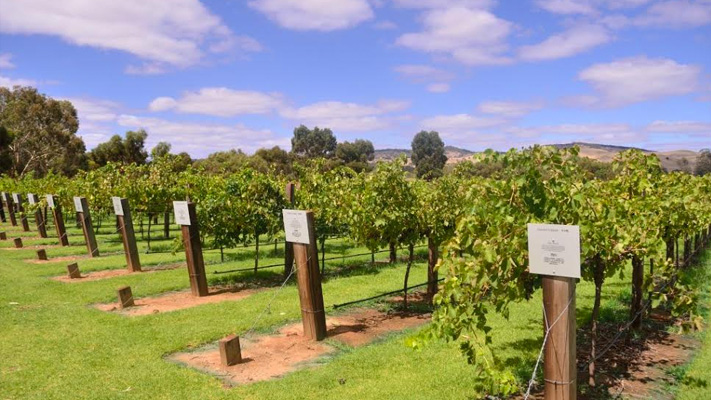 barossa valley sightseeing places adelaide