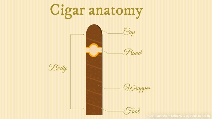 cigar anatomy explained right