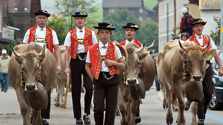 herds descent from alpine for ceremony