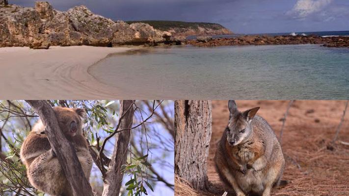 kangaroo island best travel spots adelaide