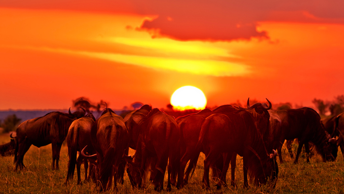 Maasai Mara Must Visit National Parks
