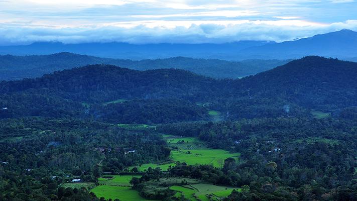 mojo rainforest retreat coorg karnataka best tourist destinations south india