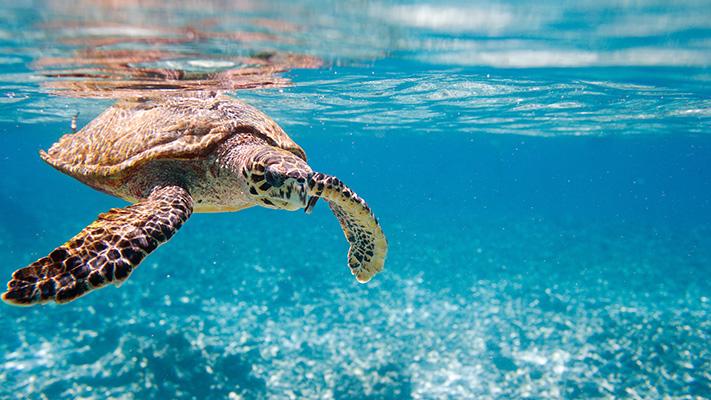 seychelles visa free holiday destination