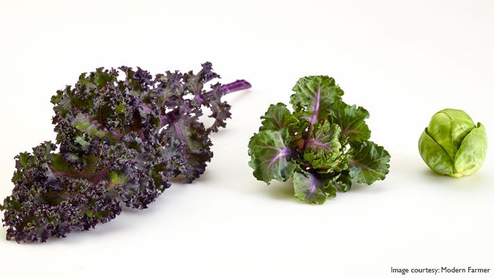 super foods kalettes hybrid kale brussels sprouts